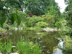 de-agapanthus zeijen hoveniersbedrijf norg met voorbeeld tuinen